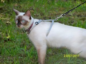 Nadia a adopté Bella en 2011