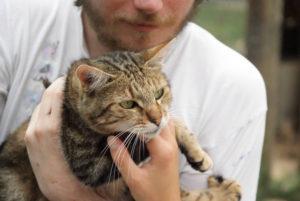 Un petit chat dans les bras au refuge SPA de Poitiers